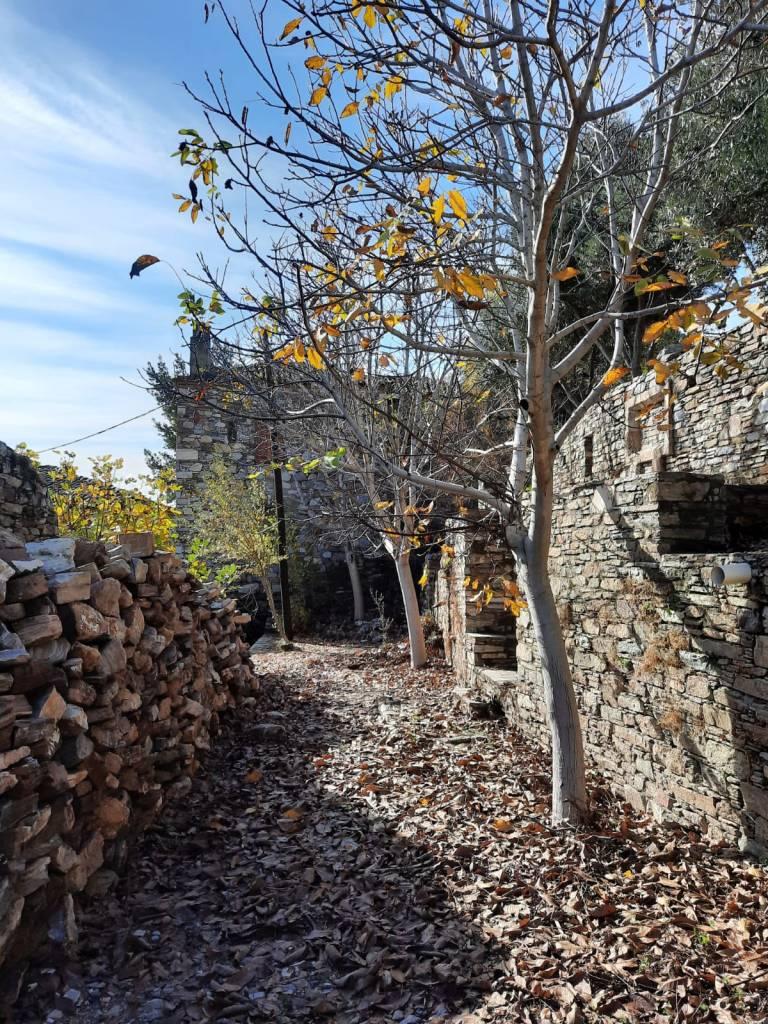 Doğanbey'de sonbahar hem güzel hem de sakin